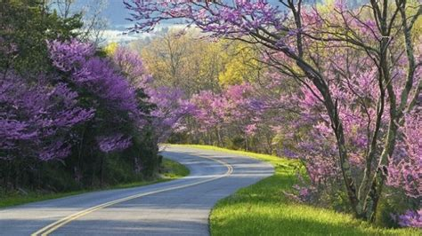 gander mountain asheville nc 35 most amazing roads in the world you should drive in
