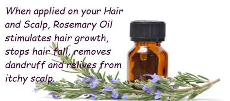 essential oils for hair growth and thickness essential oils for hair growth and thickness 632 best