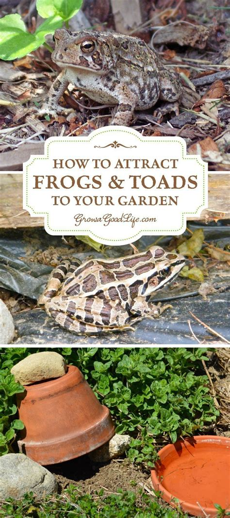 How To Find Frogs In Your Backyard by Best 25 Toad House Ideas On Frog House