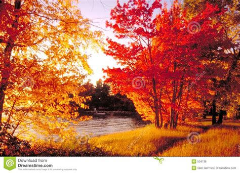 in fall fall colours north bay royalty free stock photos image