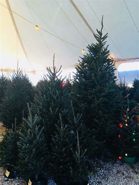 christmas tree farms chattanooga trees in chattanooga from tom sawyer tree farm home