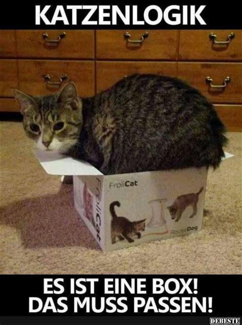 Katzen Meme - die 25 besten ideen zu lustige katzenbilder auf pinterest