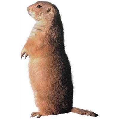groundhog day meaning dictionary groundhog meaning of groundhog in longman dictionary of