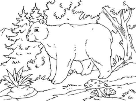 el ecosistema colouring pages dibujos de animales del bosque para colorear