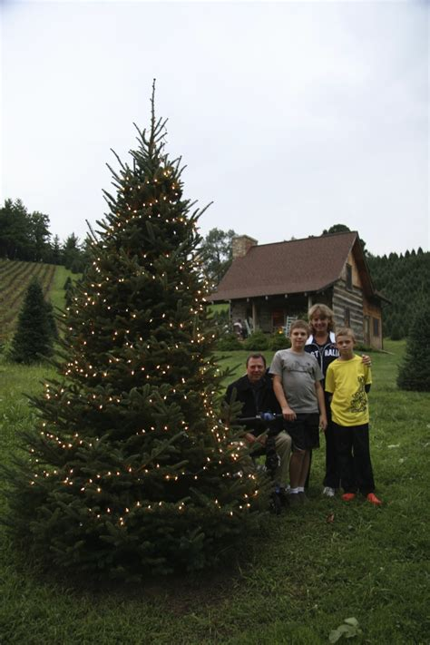 best nc christmas tree farm top 28 boyd mountain tree farm boyd mountain tree farm best business
