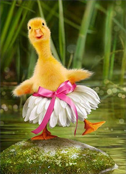 duck ballerina funny humorous easter card  avanti press