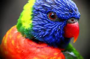 colorful birds colorful birds tropical 3888x2558 wallpaper animals