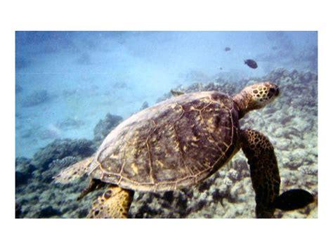 waikiki catamaran snorkeling excursion holokai catamaran turtle canyon snorkel sail from waikiki