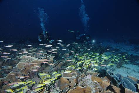 Kerang Triton taman nasional teluk cendrawasih papua backpacker jakarta