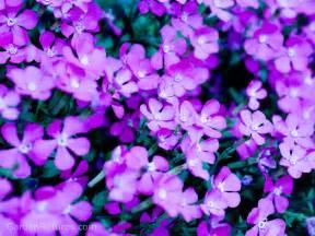 Purple garden flowers home improvement