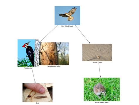 evironmental science food web