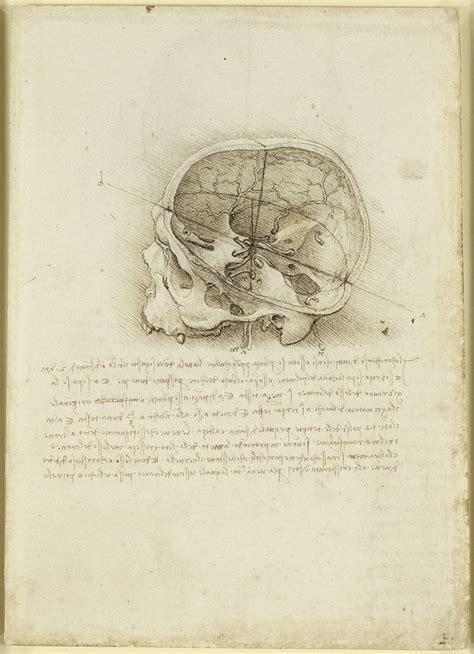 tavola anatomica sezione cranio le tavole anatomiche di leonardo