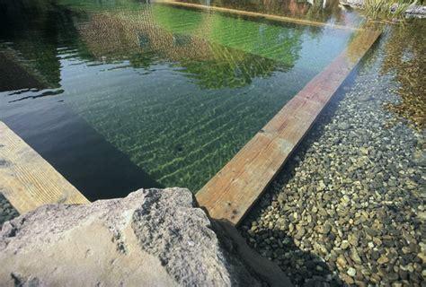 Pompa Celup Goldfish gartenteich im pool anlegen eine umweltfreundliche idee