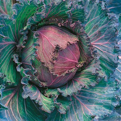 Benih Bunga Marigold T1310 3 jual benih tanaman mr fothergills di indonesia
