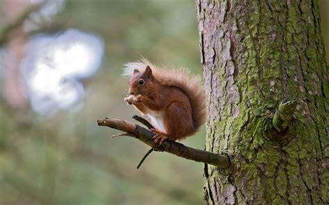 squirrel screensaver hd desktop wallpapers  hd