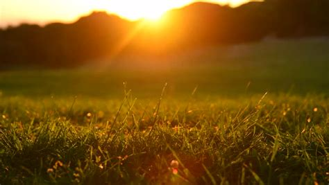 sunset nature background green grass stock footage video