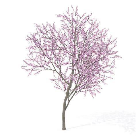 Cherry 3d Model Free
