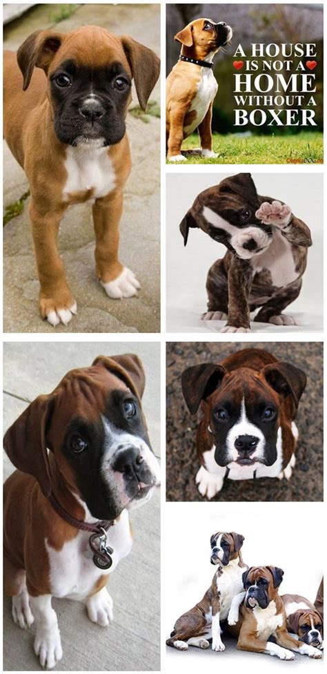 most popular dogs in america top 10 most popular breeds in america fallinpets