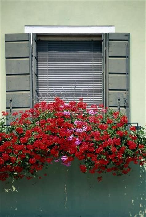 window box plants for sun sun annual flowers for window boxes