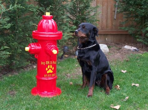 hydrant for dogs hydrant