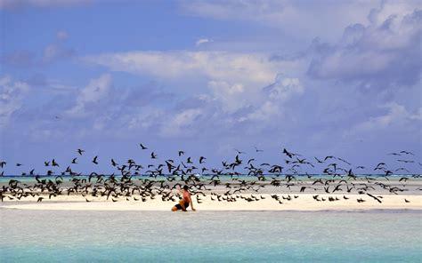 Qui n'a pas entendu parler des Cabanes Tchanquées sur l'Ile aux Oiseaux Barnes Bassin d'Arcachon