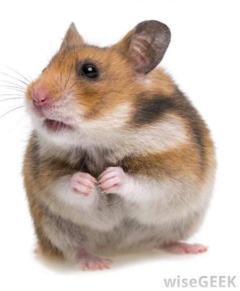 what are the different types of hamster habitats