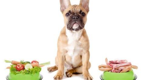 alimentazione cani anziani cibo per cani anziani alcuni consigli mondopets it