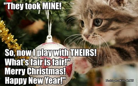 Christmas Animal Meme - 17 best images about santa paws on pinterest