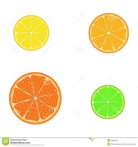 design element citrus citrus slices stock photos image 16805493