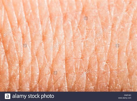 up human skin macro epidermis texture stock image search photos and photo clip pores human stock photos pores human stock images alamy