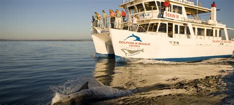 boat tour jervis bay dolphin watch cruises jervis bay huskisson