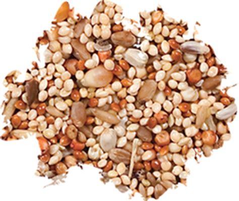 dove quail food wild delightwild delight