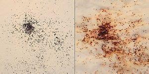 schwarze punkte im stuhl katzenfl 246 he erkennen und behandeln