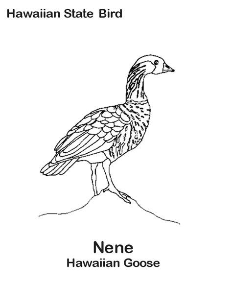 nene bird coloring page 92 nene bird coloring page backyard bird coloring