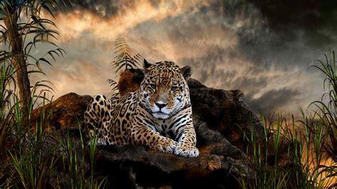 best image best jaguar bilder best jaguarbild und foto tier bilder