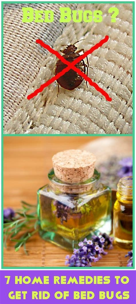 ideas  bed bug remedies  pinterest bed bugs hotels bed bugs  diy bed linen