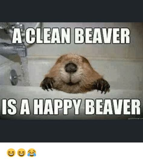 Beaver Meme - a clean beaver is a happy beaver funny meme on sizzle