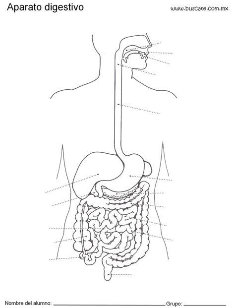 aparato digestivo 155 best anatom 237 a humana human anatomy images on