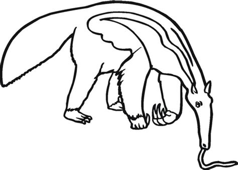 anteater eats coloring page supercoloring com