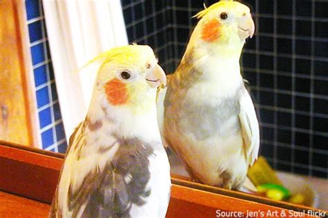 how to a bird puppy how to move with pet birds