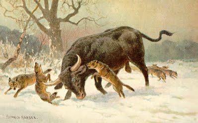herd animal aurochs d20pfsrd