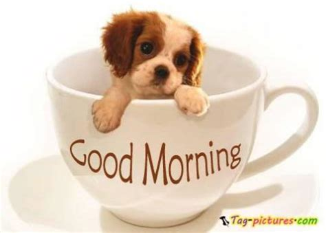 morning puppy good morning cup dog pictures morning gallery 2 i you shona peperonity