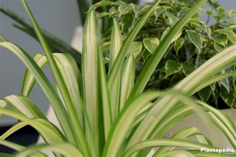 best low light low light houseplants