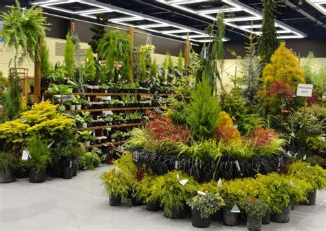 garden center plant display ideas garden center displays
