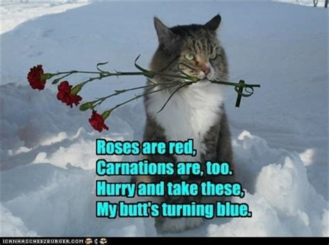 Funny Romantic Memes - romantic cat poems dump a day