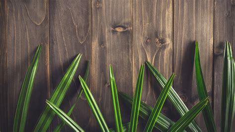 papeis de parede folhas verdes textura fundo de placa de madeira  uhd  imagem