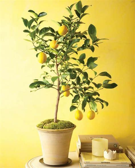 poudre blanche sur plantes d int rieur le potager d int 233 rieur en 50 belles id 233 es archzine fr