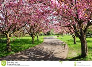 Cherry tree path royalty free stock image image 25219806