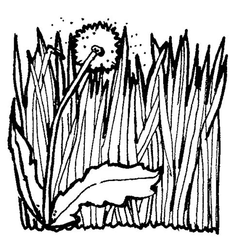 coloring pages of grass clipart best