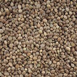 bulk buy hemp seed 15 kg for wild bird feed fishing bait
